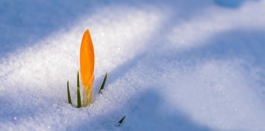 Marzo a Magnolia… primavera all'orizzonte